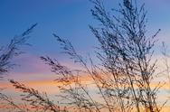 Stock Photo of France, Bretagne, Morgat, Grasses agains sky at sunset