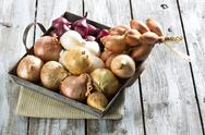 Stock Photo of Variety of onions, close up