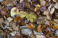 Stock Photo of Germany, Baden Wuerttemberg, Zollernalbkreis, autum leaves