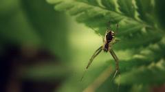 spider - stock footage