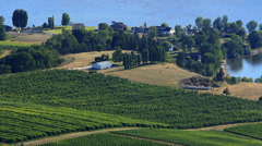 Wineries Okanagan Valley MS CC V003 Stock Footage