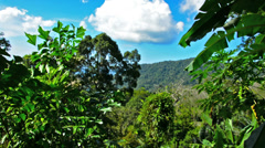 View of the tropical forest and mountains Stock Footage