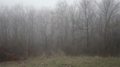 Scary Hill Foggy Forest 13 Stock Footage