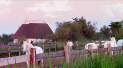 Camargue horses Stock Footage