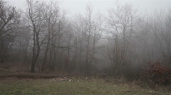 Scary Hill Foggy Forest 14 Stock Footage