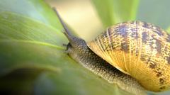 Snail, close up Stock Footage