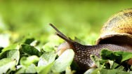 Stock Video Footage of snail, close up