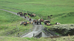 Group of horseman on icelandic horses Stock Footage