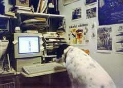 Dog on Mac Stock Photos