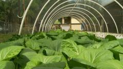 Aquaponics Gardening - stock footage