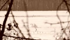 A white heron in the snow Stock Footage