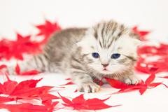 Young cat betwwen red autumn leaves Stock Photos