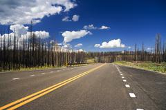Road through burnt forest Stock Photos