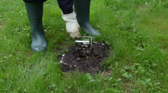 Gardener man checking mole traps in garden Stock Footage