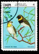 CUBA - CIRCA 1977: A Stamp printed in CUBA, shows bird Tiaris ca Stock Photos