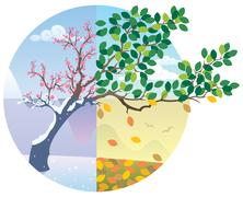 Seasons Cycle - stock illustration