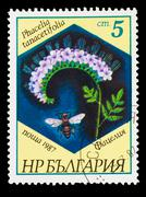 BULGARIA - CIRCA 1987: A stamp printed in BULGARIA, shows Phacel Stock Photos