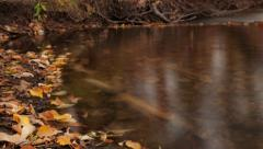 Fall leaves timelapse - stock footage