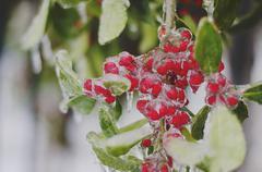 Frozen Red Berries Stock Photos