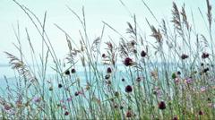 Meadow scene at Lake Balaton, Hungary Stock Footage