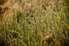 Green grass with raindrops Stock Photos