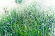Stock Photo of green grass macro bokeh