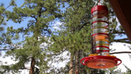 Stock Video Footage of Humming Bird Comes to Feeder