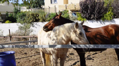 Two horses flirt and play Stock Footage
