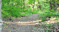 Senior man is walking with his dog in the forest Stock Footage
