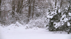 Winter Scenes Ground Cover Stock Footage