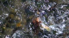 Quickly locomotive water from the mountain river Stock Footage