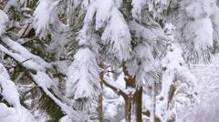Winter Scenes Hanging Needles Stock Footage