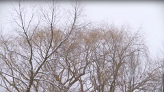 Winter Scenes Tops of Trees Willow Stock Footage