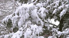 Winter Scenes Snow Cover Stock Footage