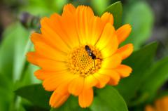 Stock Photo of ant on a flower