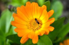 Ant on a flower Stock Photos