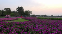 Rama ix park festival 2013 - eople and flowers (57) Stock Footage