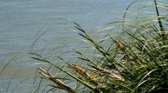 Beach grass in breeze Stock Footage