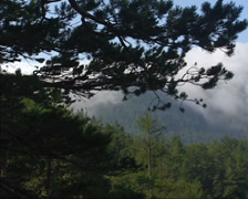 Pine forest in with fog cloud creeping over mountain slope Stock Footage