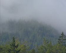 Stock Video Footage of Fog cloud slowly creeping over pine forest in Semmering, Austrian Alps