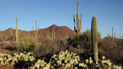 United States of America, USA, Arizona, Saguaro National Park 1 - stock footage