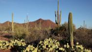 Stock Video Footage of United States of America, USA, Arizona, Saguaro National Park 1