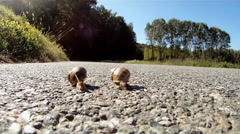 Two snails in danger Stock Footage