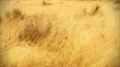 High Desert Grassland - stock footage