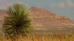 Desert Cactus Stock Footage