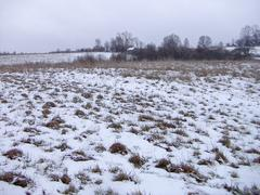 Snow-covered field - stock photo