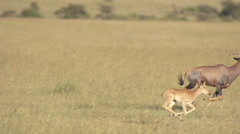 Baby topi and mother running Stock Footage