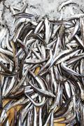 anchovy - stock photo