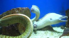 Fish in aquarium Stock Footage