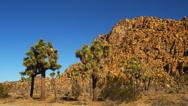 JOSHUA TREE NATIONAL PARK – DAY – ROCKS AND TREES (PAN) Stock Footage